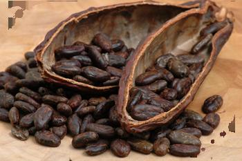Raw Cocoa/Cocoa